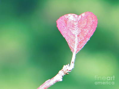 Photograph - Miss Lonely Heart by Joy Hardee