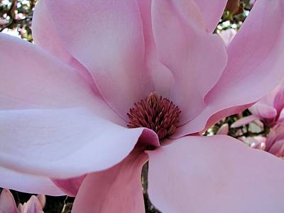 Photograph - Miss Magnolia by Lora Fisher