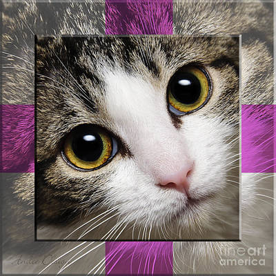 Andee Design Cat Eyes Photograph - Miss Tilly The Gift 1 by Andee Design