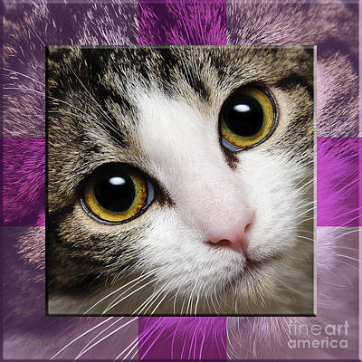 Andee Design Cat Eyes Photograph - Miss Tilly The Gift 2 by Andee Design