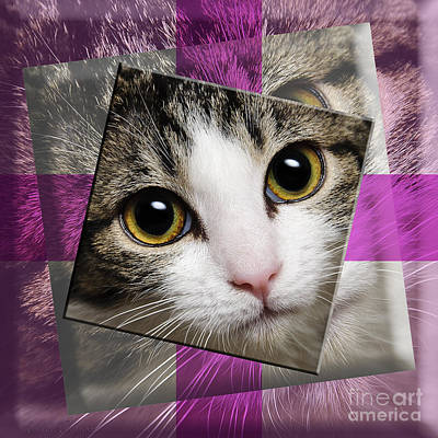 Andee Design Cat Eyes Photograph - Miss Tilly The Gift 3 by Andee Design