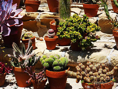 Photograph - Mission Cactus Garden by Methune Hively