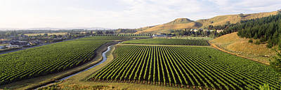 Mission Vineyard, Hawkes Bay North Art Print by Panoramic Images