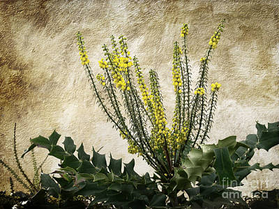 Art Print featuring the photograph Mission Wallflower by Ellen Cotton