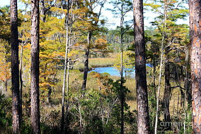 Mississippi Photograph - Mississippi Autumn by Carol Groenen