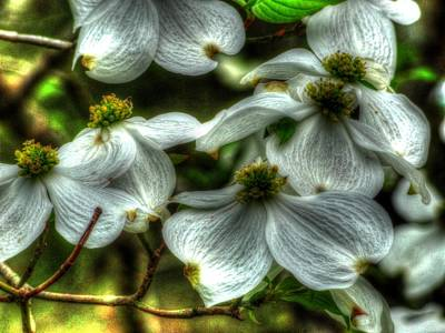Art Print featuring the photograph Mississippi Dogwood by Lanita Williams