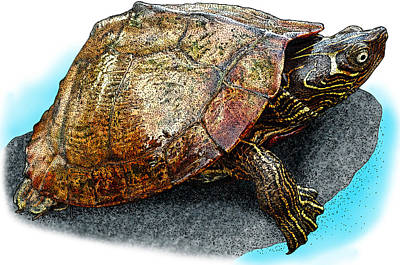 Photograph - Mississippi Map Turtle by Roger Hall