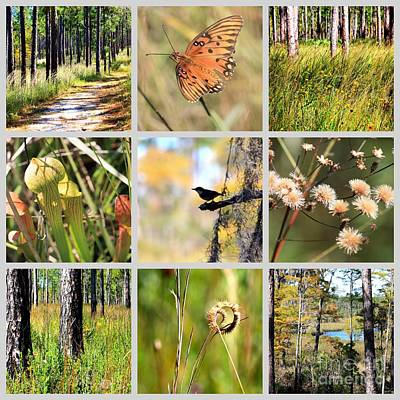 Mississippi Nature Collage Art Print
