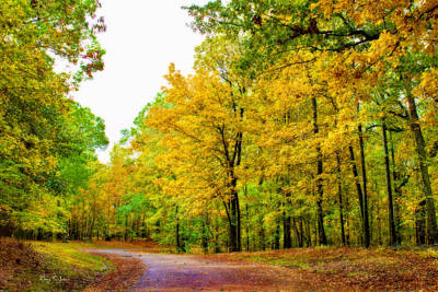 Photograph - Woodland - Path - Landscape - Mississippi Outdoors by Barry Jones