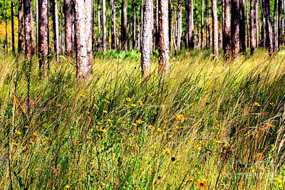 Yellow Photograph - Mississippi Pine Woods by Carol Groenen