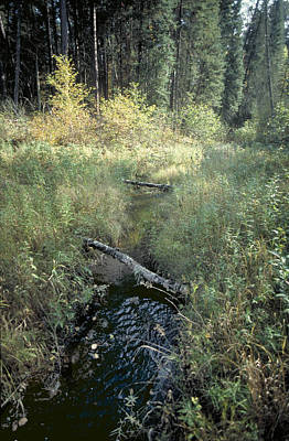 Mississippi River Headwaters Art Print by Garry McMichael