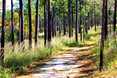 Photograph - Mississippi Trail by Carol Groenen