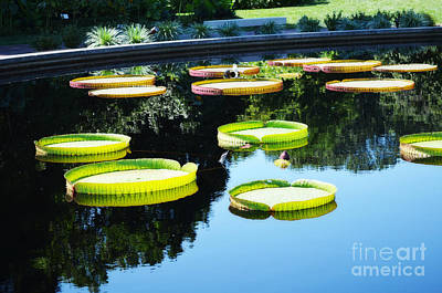 Photograph - Missouri Botanical Garden Giant Lily Pads by Luther Fine Art
