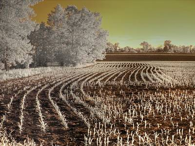 Infared Photograph - Missouri Corn Field by Jane Linders
