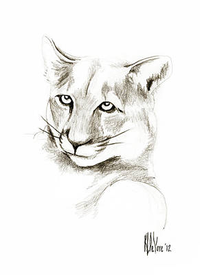 Panther Drawing - Missouri Mountain Lion II by Kip DeVore