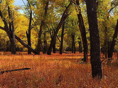 Photograph - Missouri Rivebank Autumn by Leland D Howard
