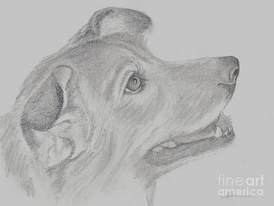 Drawing - Missy Sketch by Nan Wright