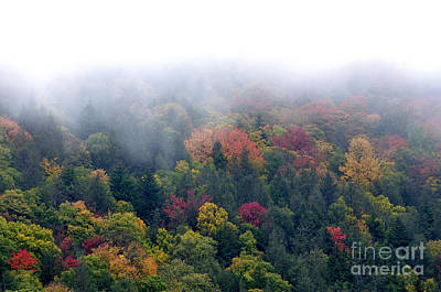 Mist And Fall Color Art Print by Thomas R Fletcher