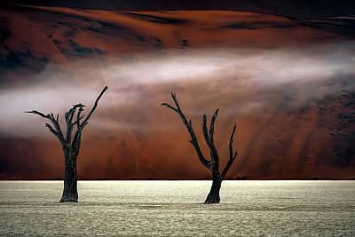 Two Trees Wall Art - Photograph - Mist In The Desert by Peter Poppe