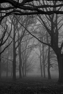 Photograph - Mist In The Park by Maj Seda