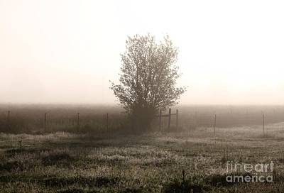 Photograph - Mist Of Morning by Erica Hanel