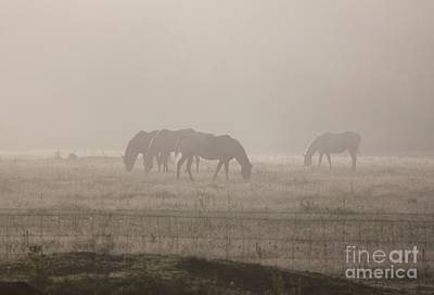 Photograph - Mist Of Morning II by Erica Hanel