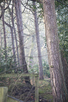 Photograph - Mist Through The Trees by Spikey Mouse Photography