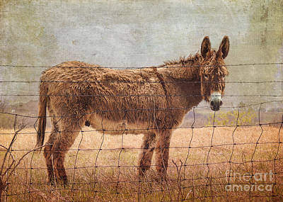 Domestic Animals Digital Art - Mister Cool by Betty LaRue