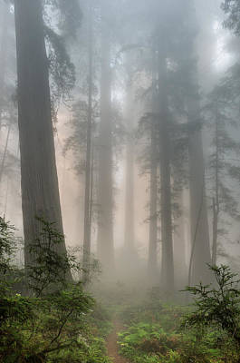 Photograph - Mists Among The Redwoods by Greg Nyquist