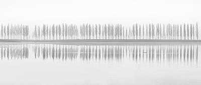Duck Photograph - Misty Alley by Fotoea