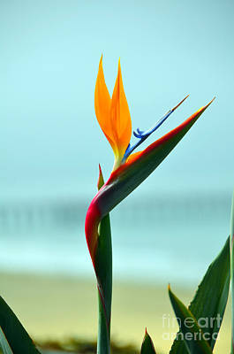 Photograph - Misty Beach Morning Bird Of Paradise by Debra Thompson
