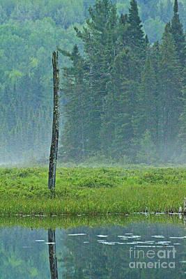 Photograph - Misty Bog by Joshua McCullough