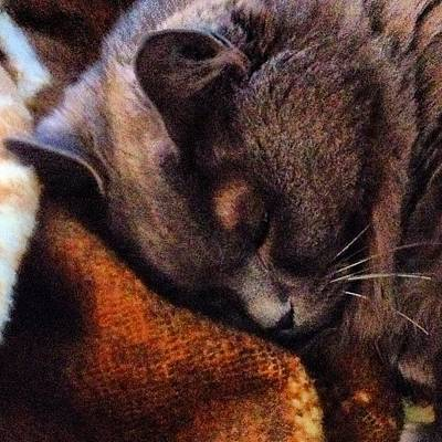 Animals Photograph - Misty Catnapping...#cat #kitten by Joann Vitali