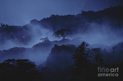 Photograph - Misty Cloud Forest At Dusk by Gregory G Dimijian MD