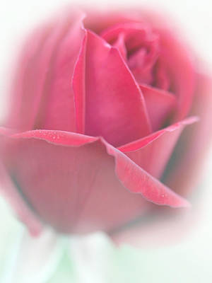 Photograph - Misty Dark Pink Rose Flower by Jennie Marie Schell