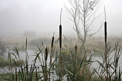Waterscape Photograph - Misty Day by Heiko Koehrer-Wagner