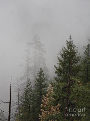 Photograph - Misty Evergreens 2 by Audrey Van Tassell