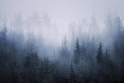 Misty Fantasy Forest Art Print by Guido Montanes Castillo