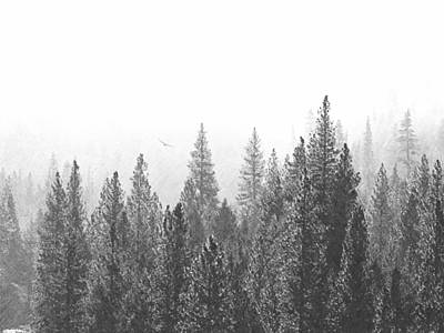 Misty Flight In The Forest Art Print by Frank Wilson