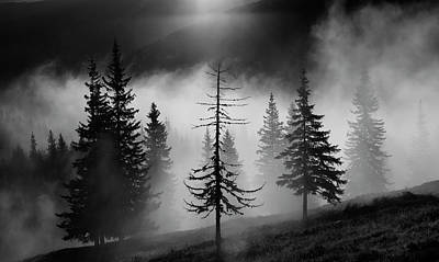 Fir Trees Photograph - Misty Forest by Julien Oncete