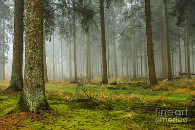 Rights Managed Images - Misty fall forest Royalty-Free Image by Patricia Hofmeester