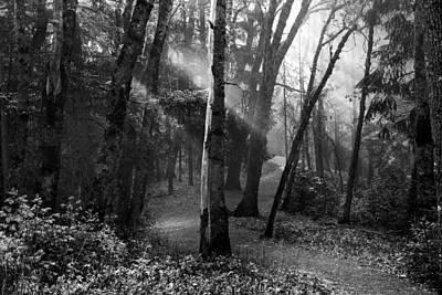 Misty Forest Trail Art Print by Leland D Howard