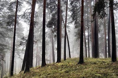 Photograph - Misty Forest by Vladimir Kholostykh