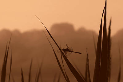 Photograph - Misty Marsh Morning Silhouette by Deborah Smith