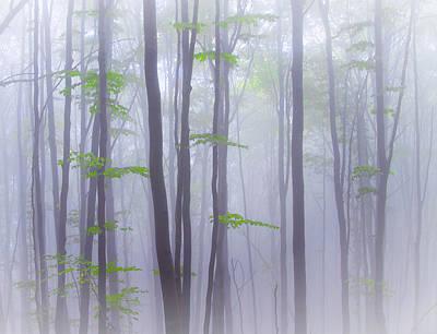 Mist Photograph - Misty by Michel Manzoni