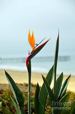 Photograph - Misty Morning Bird Of Paradise by Debra Thompson