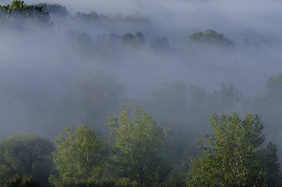 Photograph - Misty Morning by Celso Bressan