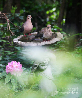 Misty Morning Doves Art Print by Jinx Farmer