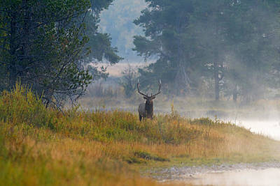Photograph - Misty Morning Elk by Shari Sommerfeld
