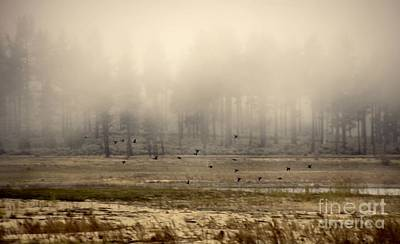 Photograph - Misty Morning Flight by Peggy Hughes